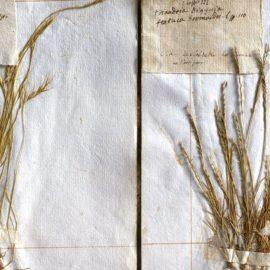 MNHN : Des herbiers bien traités